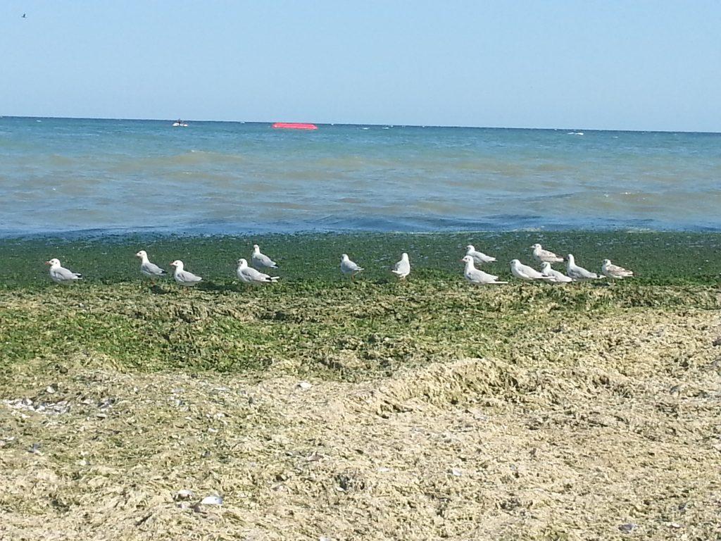Memory photos of my beautiful seagulls