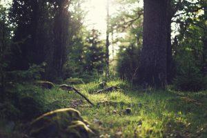 samurai forest